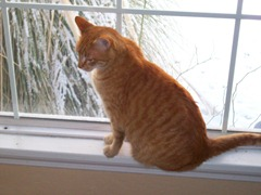 Sonnie_Window
